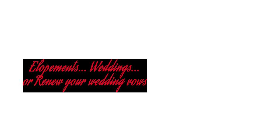 Noosa council beach wedding